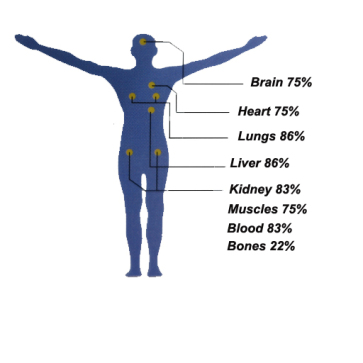 water-percentage-in-human-body